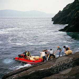 "Group of unrelated men landing sheep at the perilous inlet on Inis Tuaisceart, County Kerry - an example of ""méitheal."""
